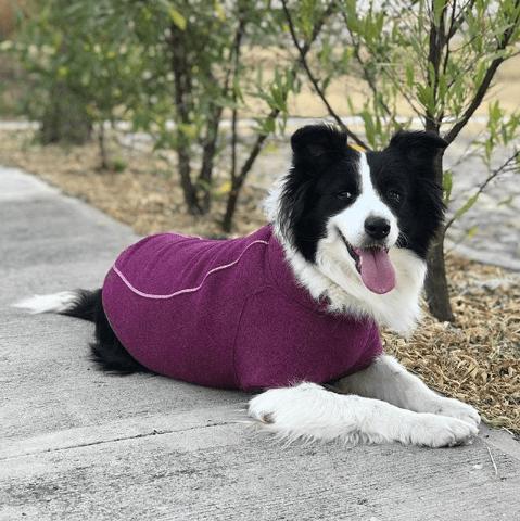 bed52a6ded82 Necesitan tu perro un suéter en invierno  – Juega Con Tu Perro