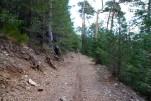 Hay ratos que vamos por el bosque de pinos