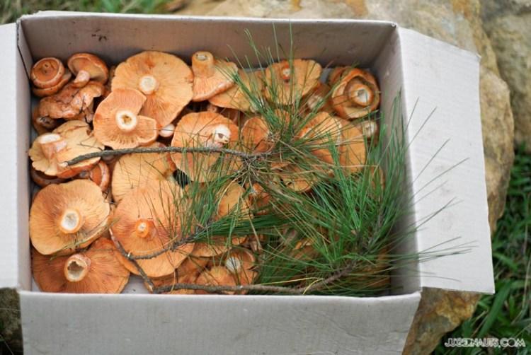 Mushrooming with Studio Neon and WildStories (22)