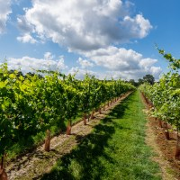 Destination Vineyards in Sussex:  Tours, Food and Accommodation