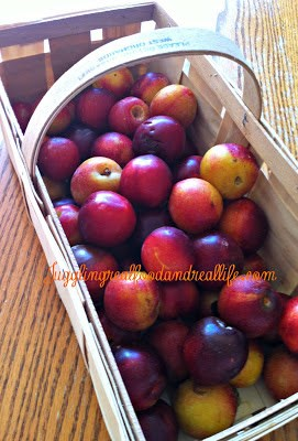 Basket of Fresh Plums