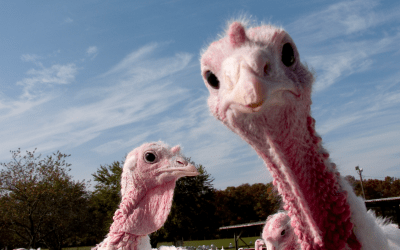 Pick the biggest stock market turkey for the next 3 months and win $1,000 bucks from me
