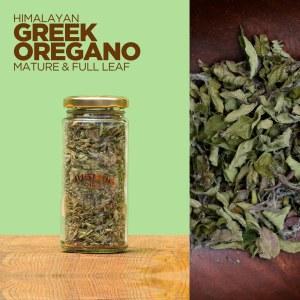Greek Oregano Full Leaf Mature culinary herb from Jugmug Thela