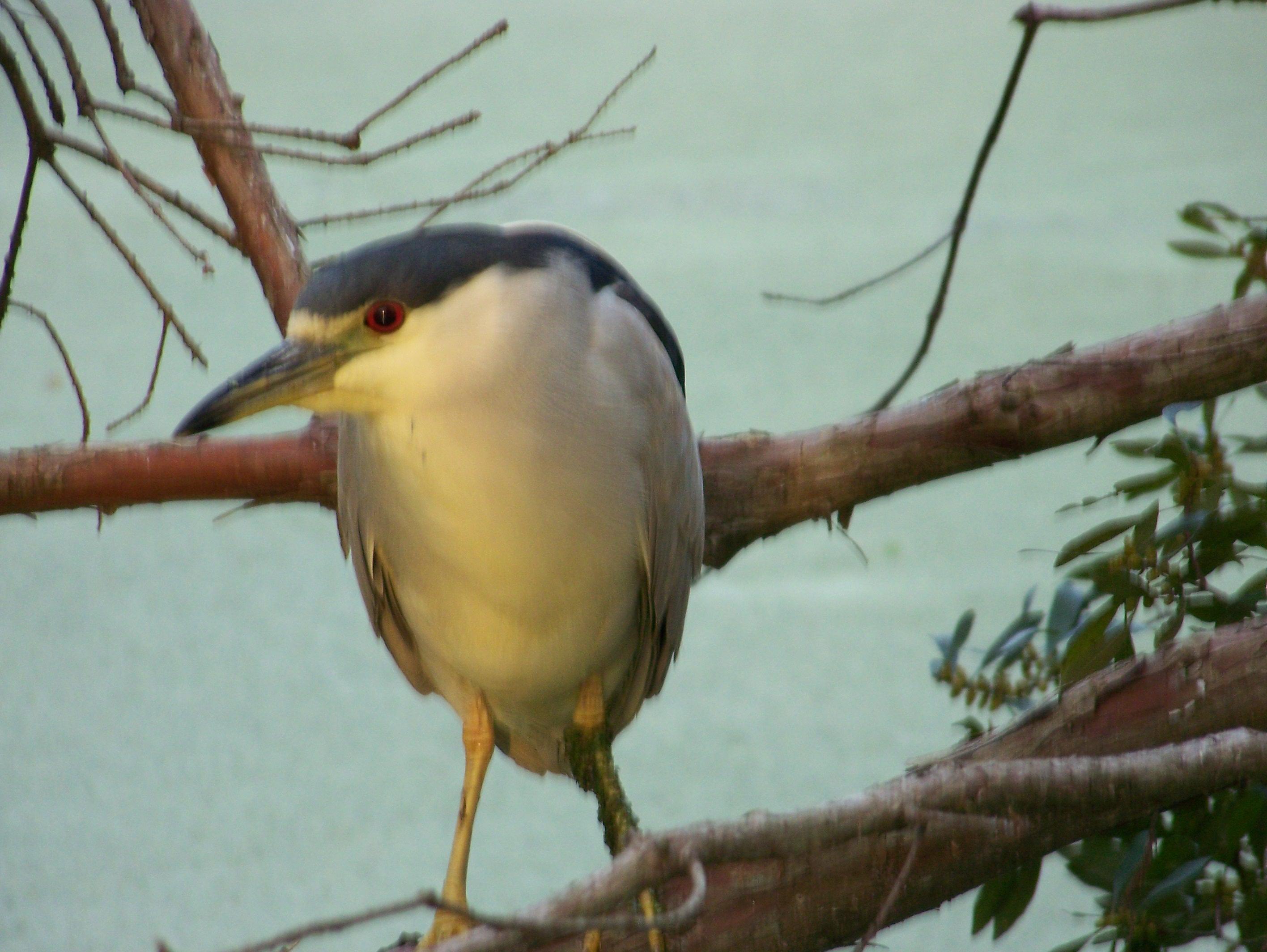 Heron, 2008