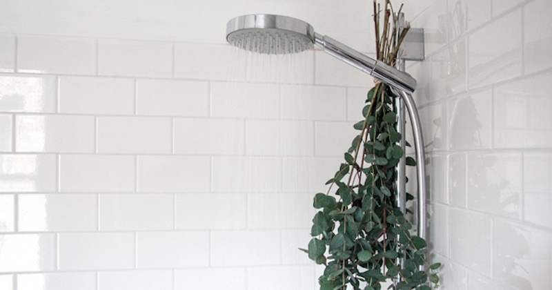 Image result for eucalyptus shower