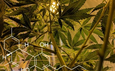 Everything You Need to Know About Endocannabinoid System
