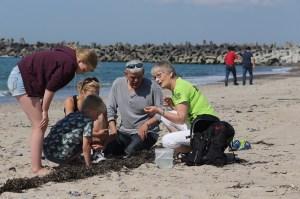 ravsafari, oplevelser i vestjylland, oplevelsesgaver i vestjylland, gaver til under 100 kr, oplevelsesgaver til under 100 kr