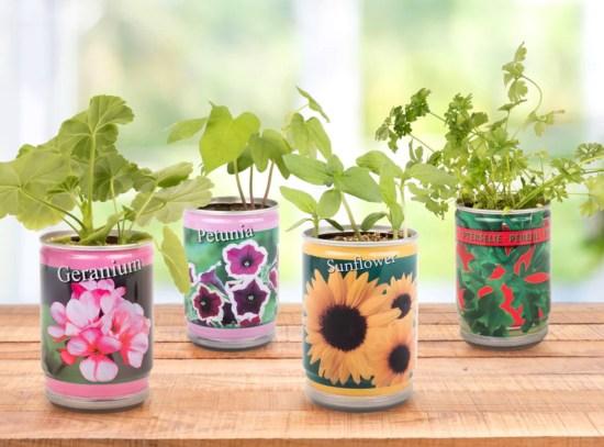 planter i dåse, dåse planter, nemme planter, billige planter, planter i gave, planter til børn, Gave til pakkeleg, mandelgaver, mandelgaver til børn