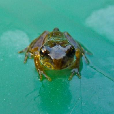 Froglet3