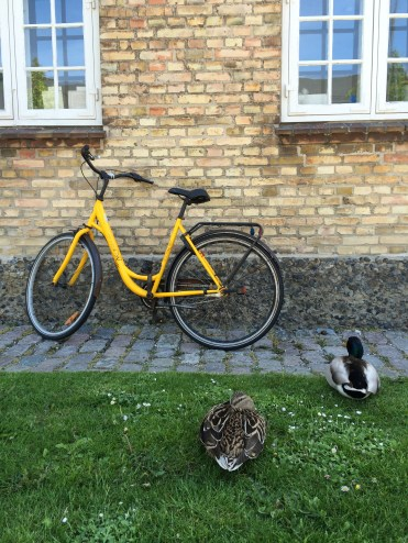 Copenhagen has equal measures of bicycles and wildlife