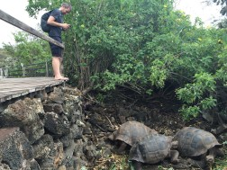 Galapagos turtles are big: here's a couple of them next to Verne, for size