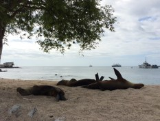Sea lions are like cats: any position is good enough for sleeping!