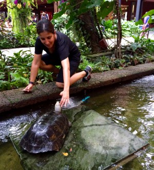 Jules petting a cheeky turtle that was roaming around the House's gardens