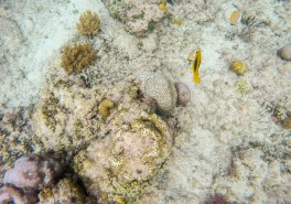 The waters are so transparent that you can see beautiful reefs and fish from nearshore