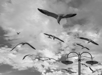 Seagulls at Kemah Boardwalk, Houston (16mm, 1/420s, f7.1, ISO 200)