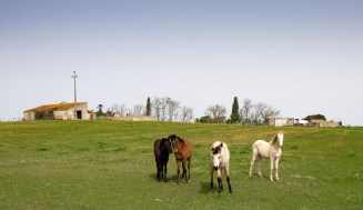 Curious horses near Pegões, Portugal (16mm, f7.1, 1/350s, ISO 200)