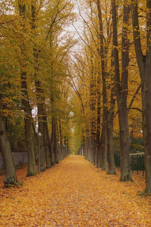 Road between Autumn Trees