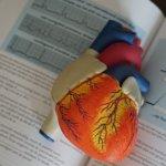 Model heart on med book