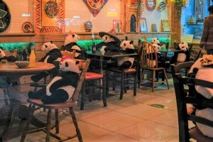 Stuffed Pandas in a Mexican Restaurant