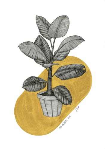 Plant Opulence 3