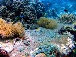 Colorful seascapes of aquatic life.