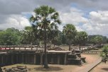 A Tall Tree Towering Over Angkor Wat Grounds