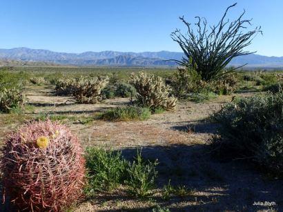 Tubb Canyon; barrel cactus and ocotillo