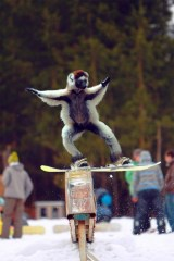 snowboarding monkey