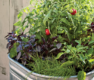 small-gardens-one-pot-veggie
