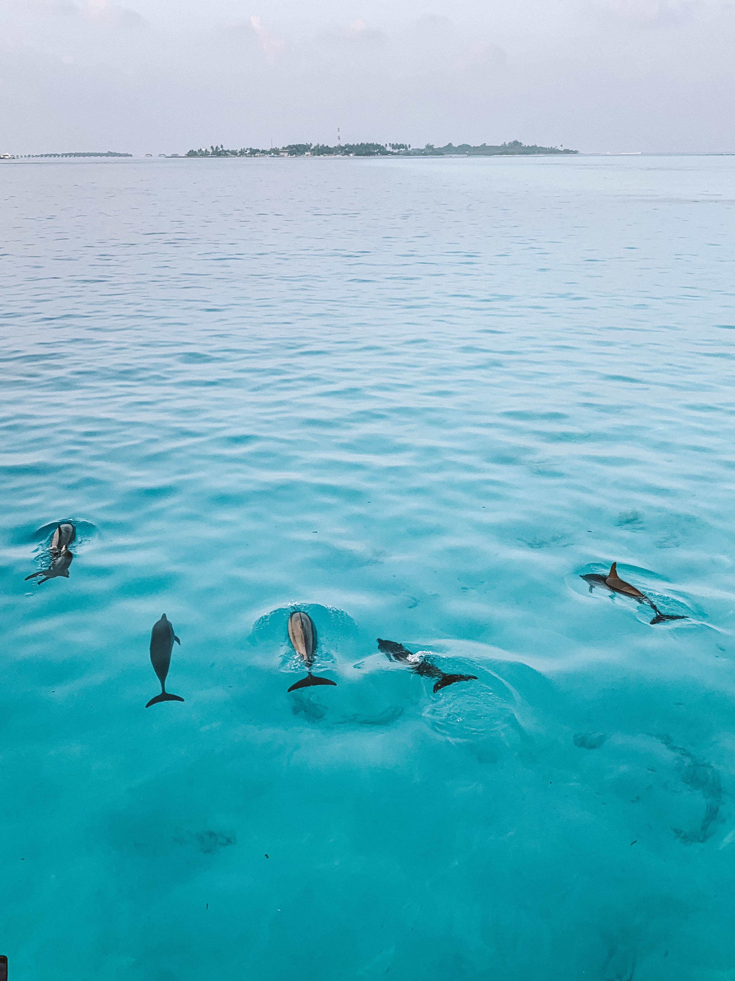 dolphin cruise in maldives