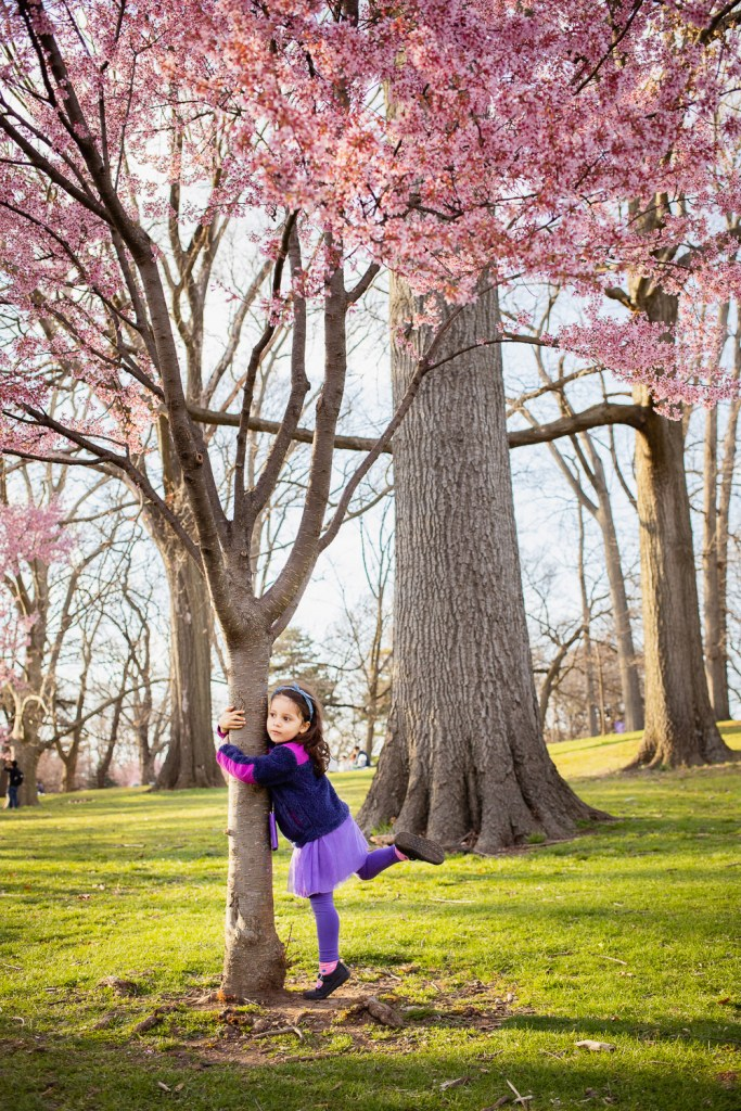 cherry blossom time of the year for photo session