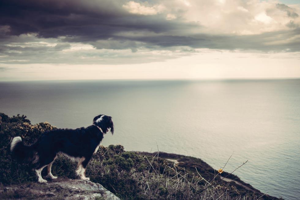 dog_staring_at_sea_juliana_scodeler_pet_photography