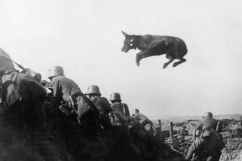 Message dog on Western front, 1917