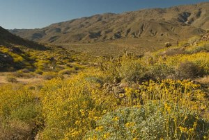 View from the Plum Canyon area toward San Felipe Wash and Highway 78.