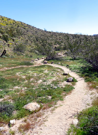 Meandering trail Yaqui Spring