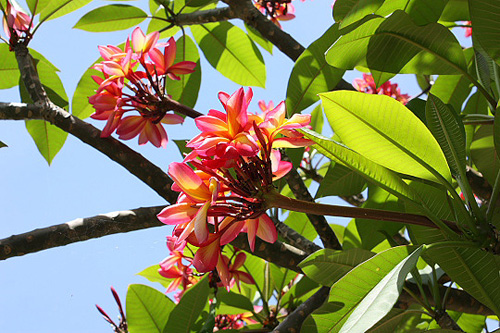 Bathsheba on Barbados