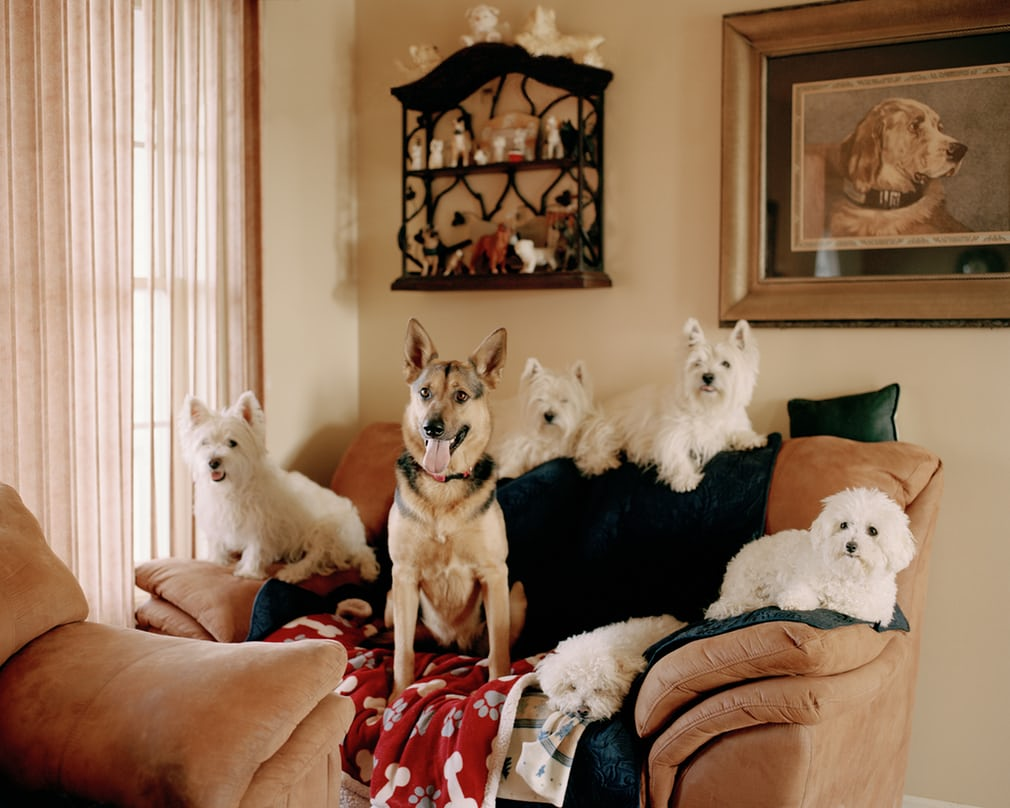 Freestyle dog dancing – in pictures