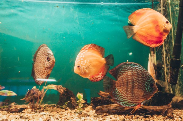 The Aquarium How to spend 1 day in Constanta, Romania