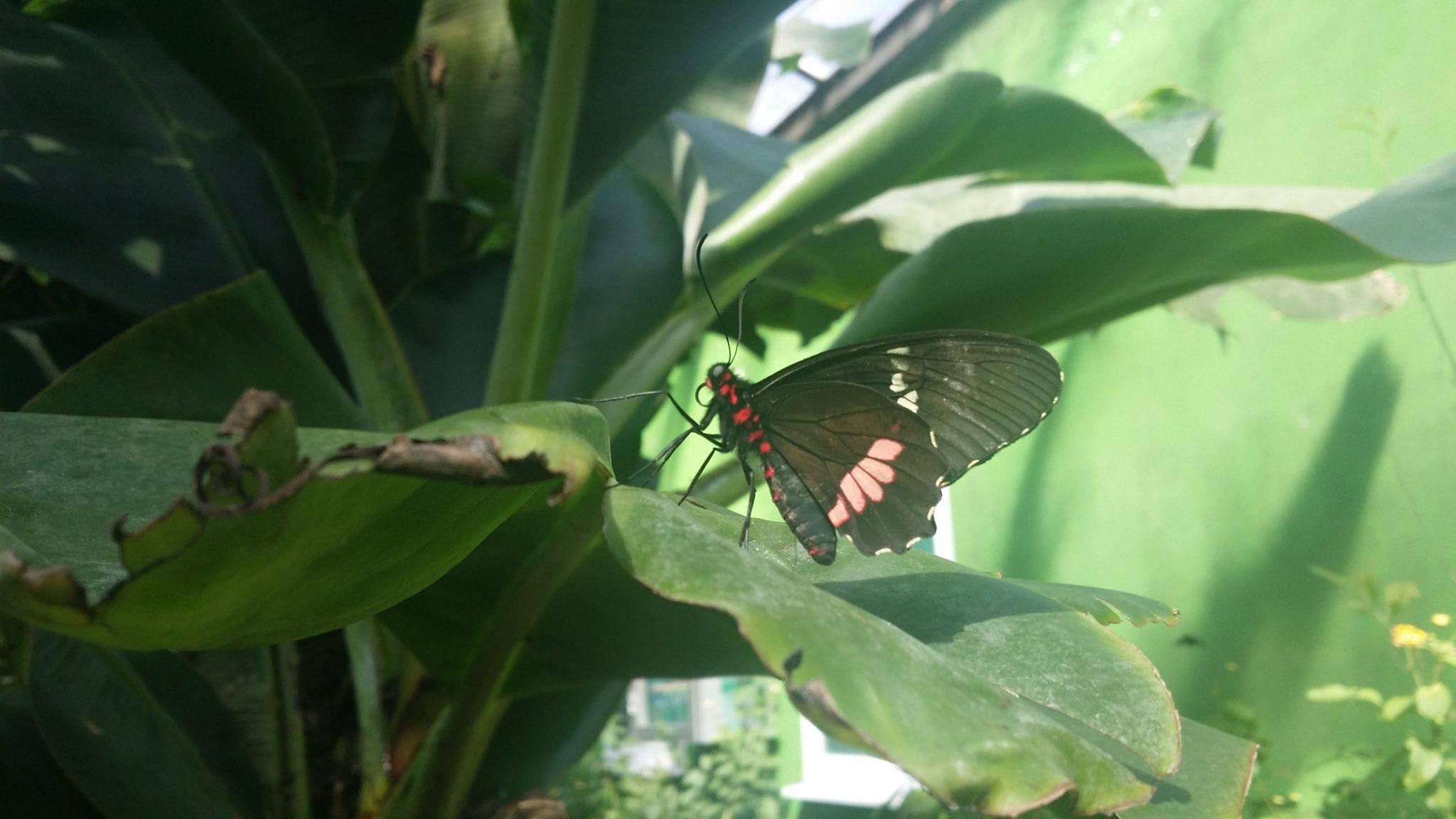 papillon, zoo suances