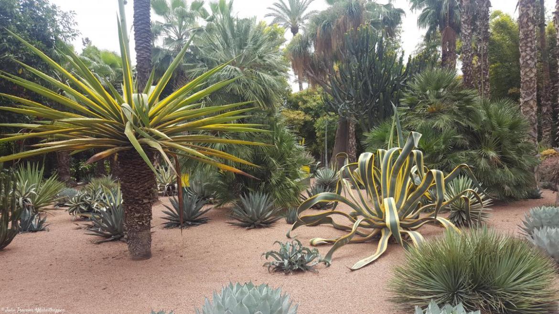 Marrakech - Jardins de Majorelle (2)