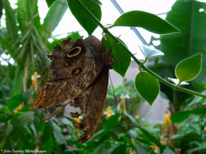 Serre-aux-papillons