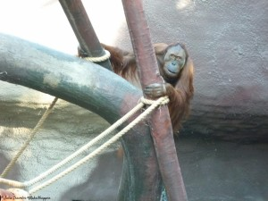 Zoo rague