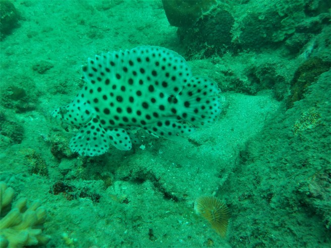 Spotted.. Fish