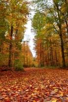 Herbst in Kehlheim 2017