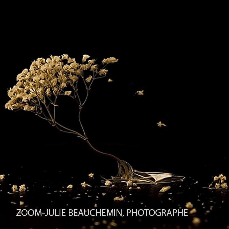 La_perseverance_ZOOM©Julie_Beauchemin