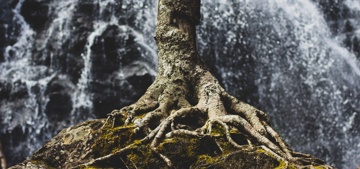 Discovering Your Roots Can Boost Your Growth
