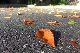 10.08.14 | fall