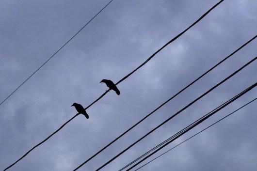 12.16.14 | the birds