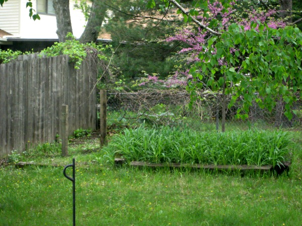 4 x 4 posts in juliecache's backyard