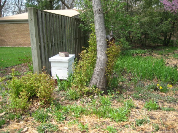 garden bed with beehive